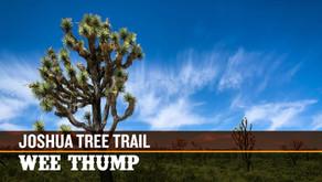 The Joshua Tree Trail | Wee Thump Joshua Tree Wilderness, NV