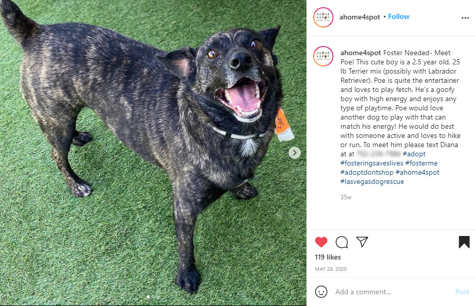 Instagram post of a terrier lab mix on false grass turf, excited for adoption.