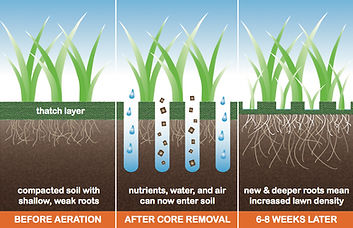 core aeration picture.jpg