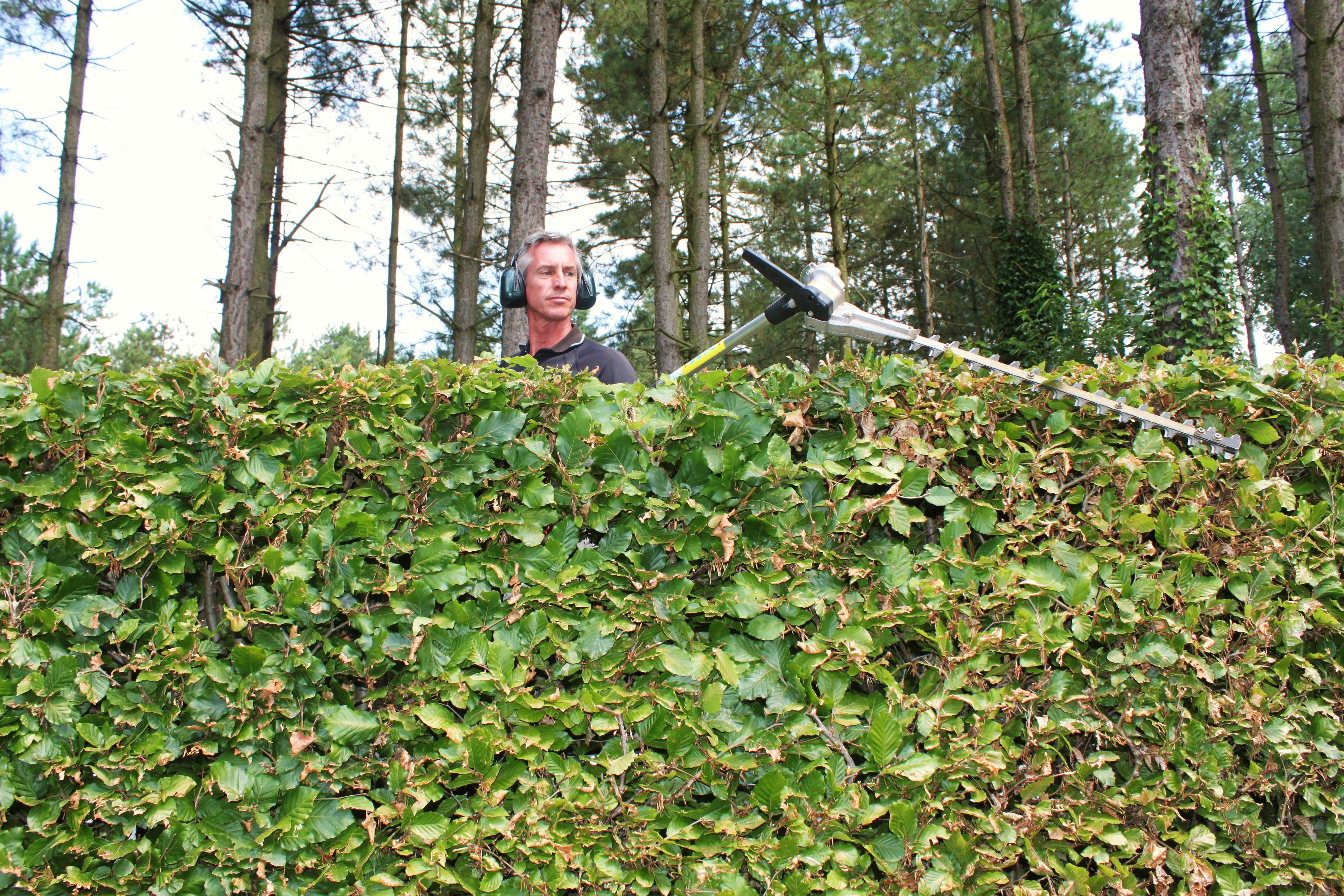 Greendelight | tuinonderhoud
