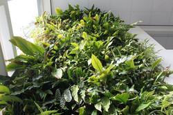 Greendelight | verticale tuin