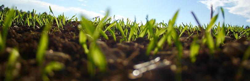 grass-1148913_1920_edited.jpg