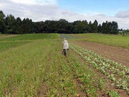 LOGRAR UNA AGRICULTURA SOSTENIBLE EN LATINOAMÉRICA SI ES POSIBLE, SEGÚN LA FAO