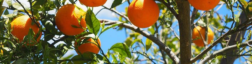 oranges-1117628_1920_edited.jpg