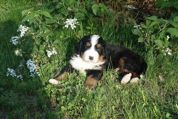 puppy2nd.jpg