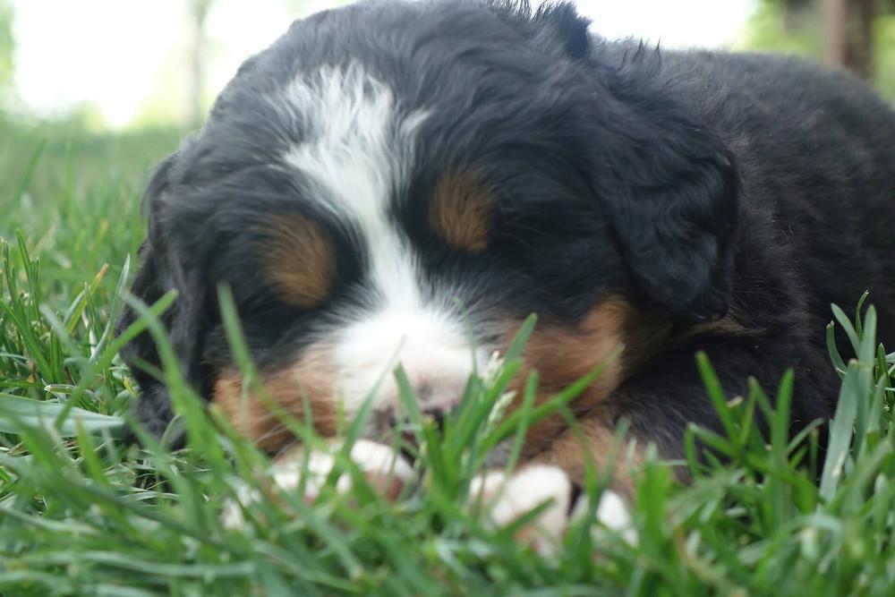 puppy6th.jpg
