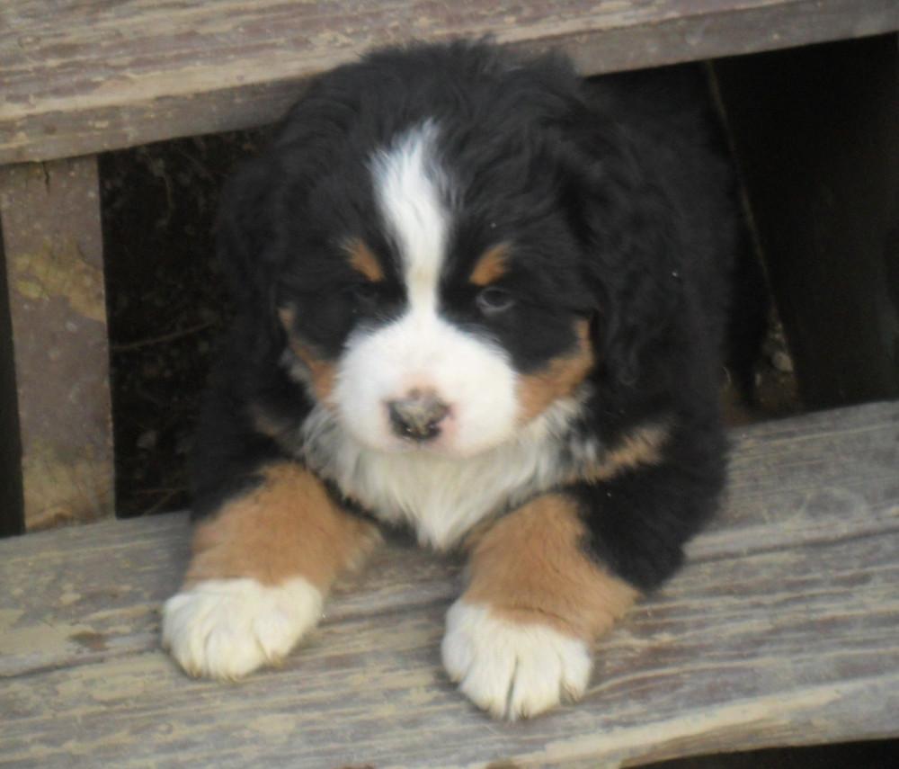 puppies of 2012 006.JPG