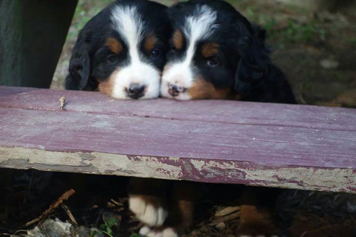 puppy3rd.jpg