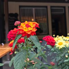 Flowers_Switzerland.jpg