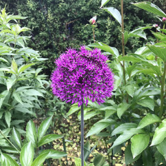 Purple_Flower.jpg