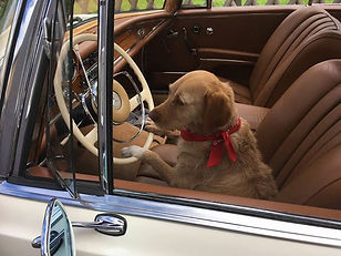 Hund allein unterwegs