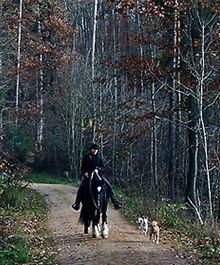 Hunde mit beim Ausreiten