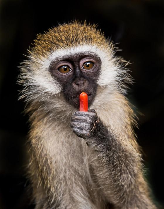 Channeling Sammy Davis, Jr. aka The President's Pet Monkey