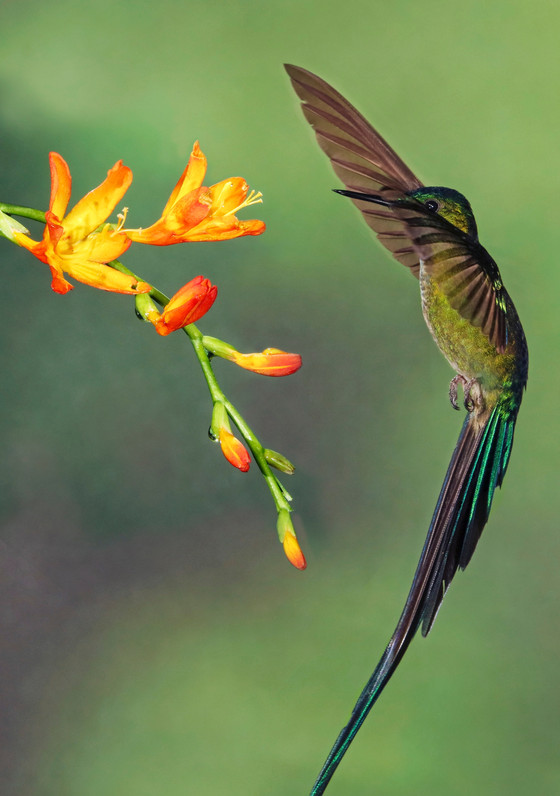 Two Beats of a Hummingbird's Wing