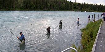 Line, Flossing for Sockeye Salmon on the Kenai River