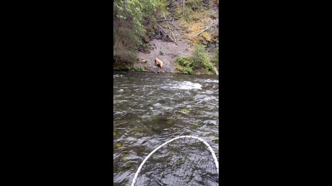 Russian River Bears