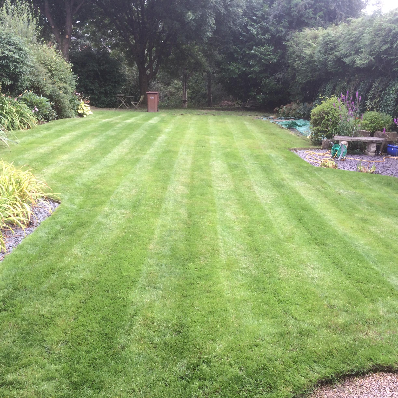 Lawn Stripe
