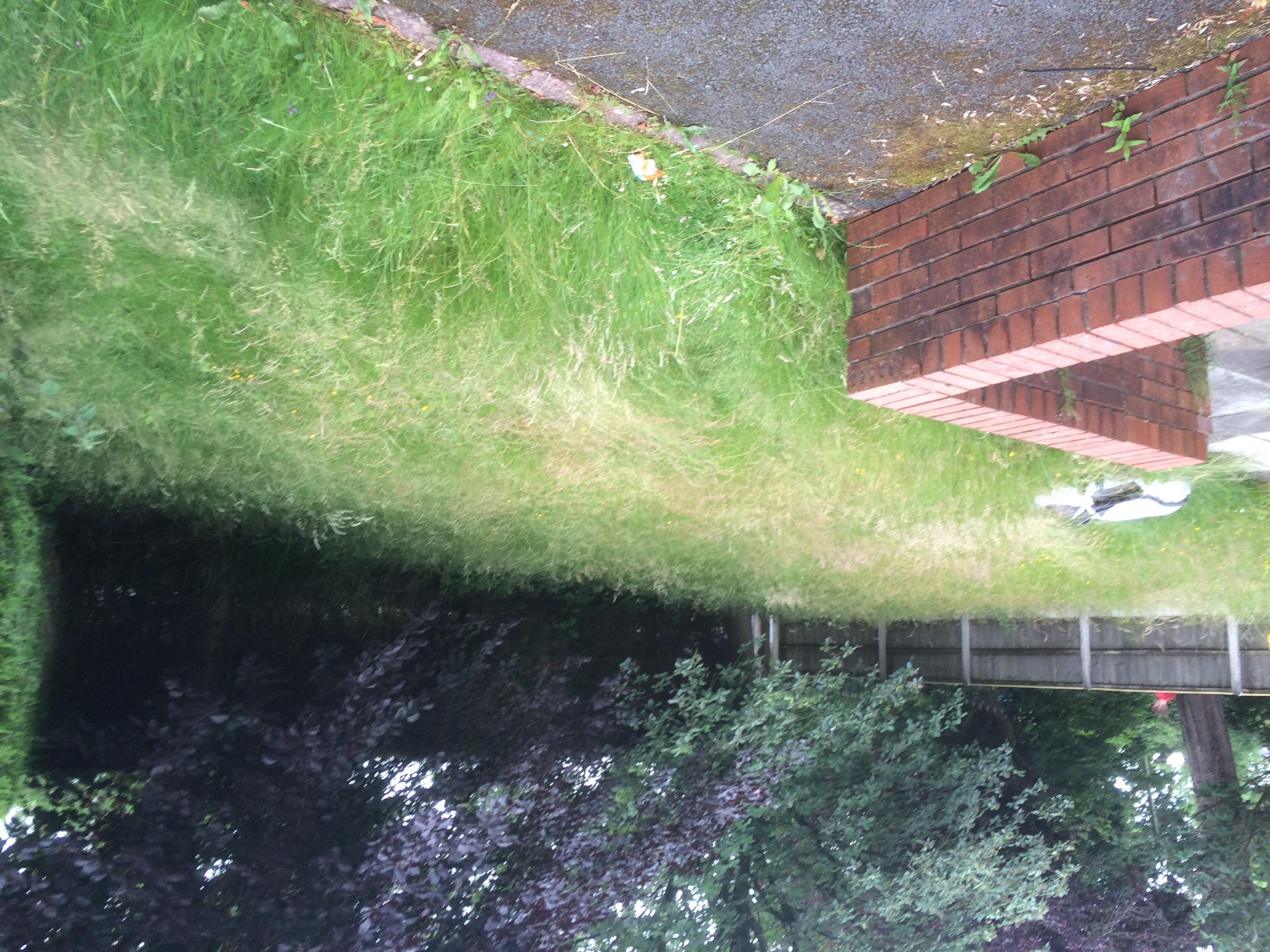 Grimsargh lawn 1