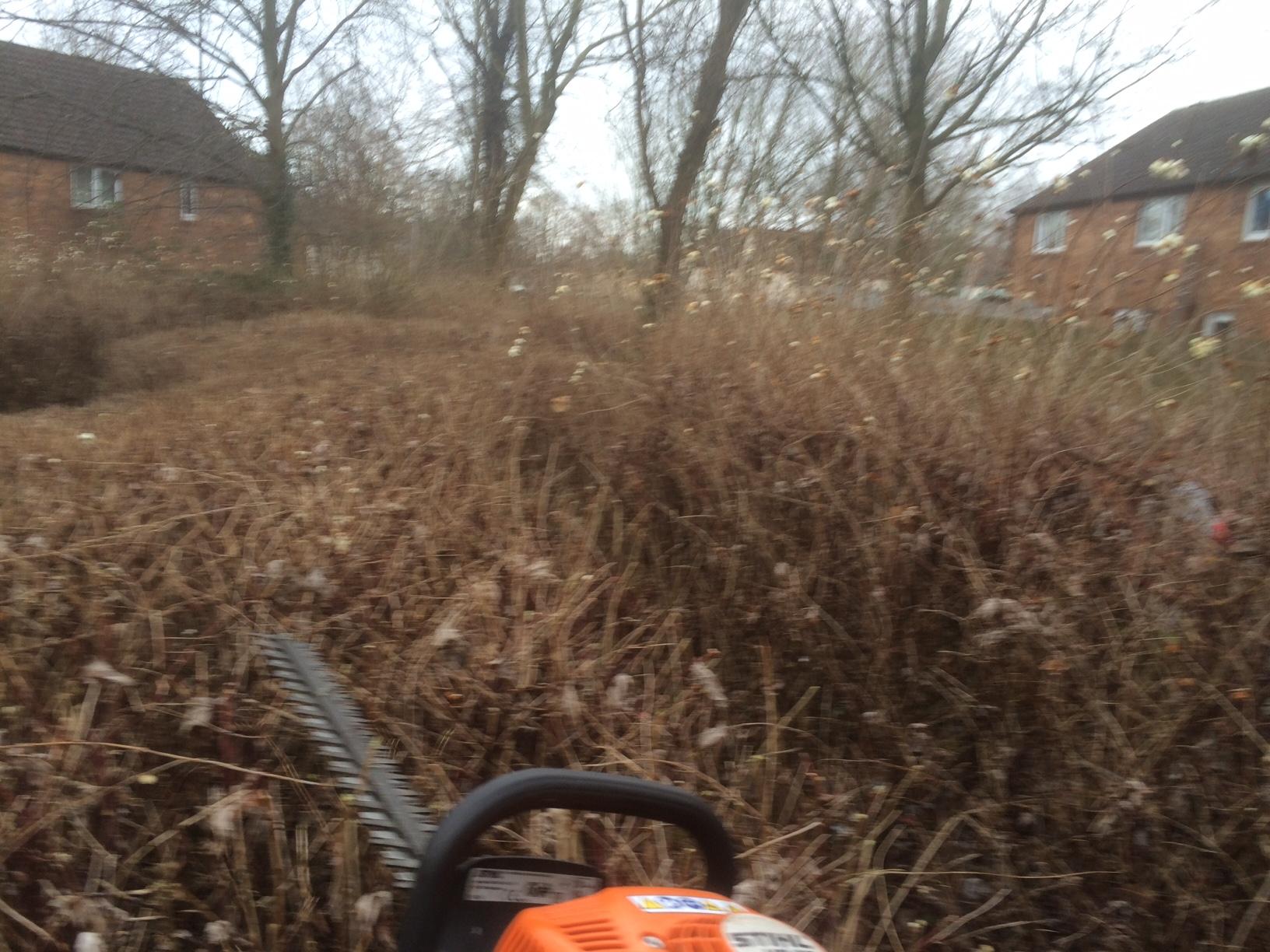 04/01/17 bushes