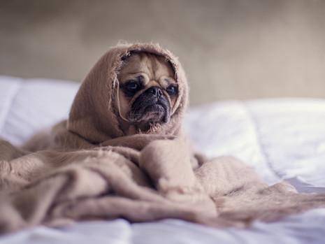Erken Kalkmak İstiyorum Ama Yataktan Çıkamıyorum