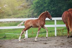 KM Sway 3 måneder gammel