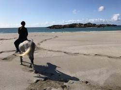 Ridning på stranda