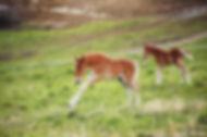 03.05.20_Maja_føll2-mini.jpg