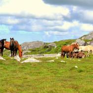 Hestene trives på plattingen