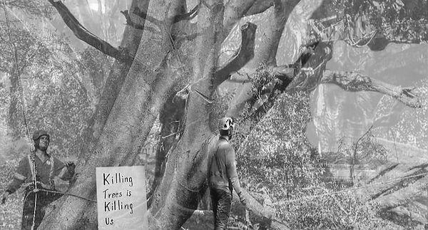 Killing trees is killing us