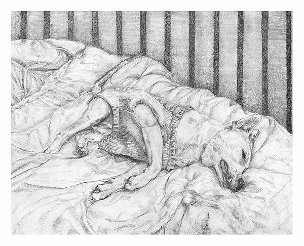 Pencil drawing of beloved family pet who has just died byJennifer O'Brien