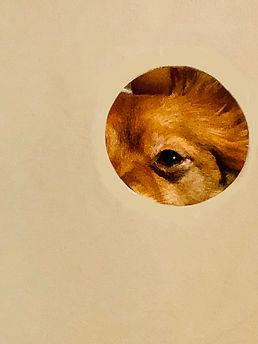jennifer-obrien-jmobcreative-eye see you copy.jpg