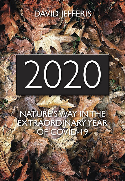 2020 Covid-19 book.jpg
