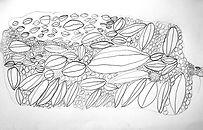 Y3 student Banksia drawing 4.jpg