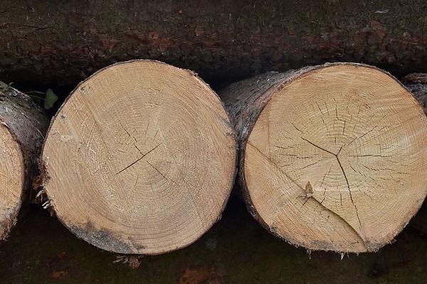 Holztrans handelt Holz