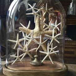 Nuée d'étoiles de mer dans un globe contemporain Modèle disponible, prix sur demande