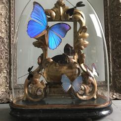 Globe d'époque Napoléon III, ensemble de papillons et de libellules sur un ancien reliquaire en bois du XVIIéme siècle Modèle vendu