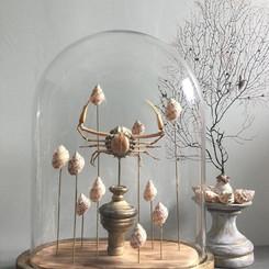 Globe contemporain avec sujet marin, coquillages et araignée de mer naturalisée -Gorgone et coquillages  sur socle en bois patiné Modèles disponibles, prix sur demande