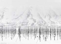 Vincent Fournier - Antennas field
