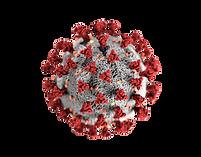 Coronavirus_Covid-19-removebg-preview.pn
