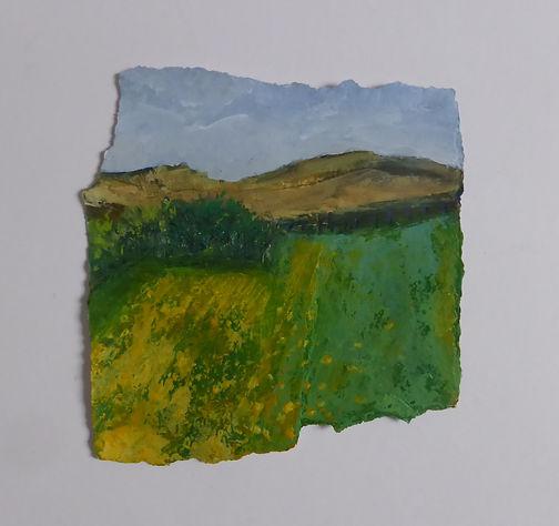 11 Buttercup Field.jpg