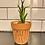 Thumbnail: Clay Plant Pots