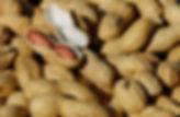 nuts-1736520_1920.jpg