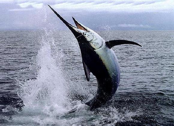 Pesce spada al rosmarino e sale agli agrumi