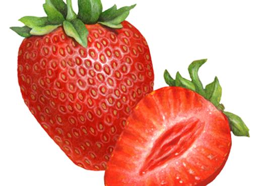 Whole Strawberries SIMPLOT
