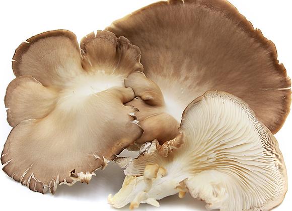 Organic Phoenix Oyster Mushrooms (FRESH-Local)