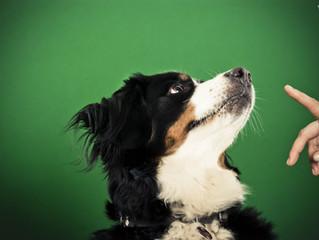 DDO guide to…dog training methods!