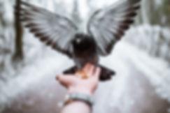 Pigeon qui prend son envol