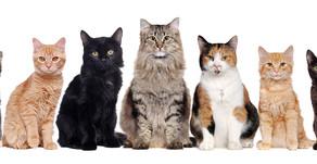 O Clube dos Gatos