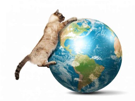 Curiosidades do Mundo Miau - 2 -