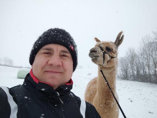 Schneewanderung mit Alpakas - auch momentan möglich